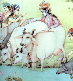 Krishna_cows