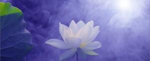 moon-lotus