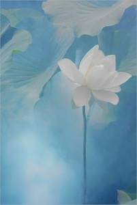 single-lotus-flowers