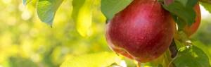 was-the-forbidden-fruit-an-apple