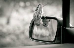 едно врабче кацна на огледалото на колата